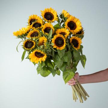 Sonnenblumen 15 Stiele