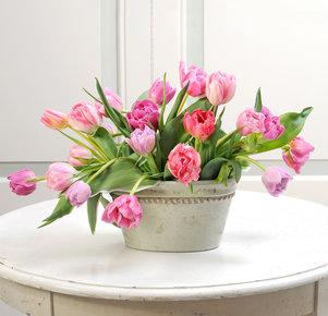 Tulpen gefüllt in Rosa 20 Stiele in Rosa