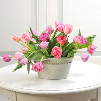 Tulpen gefüllt in Rosa 20 Stiele
