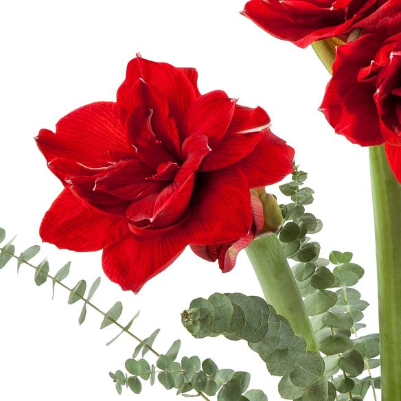 Amaryllis in Rot 3 Stiele