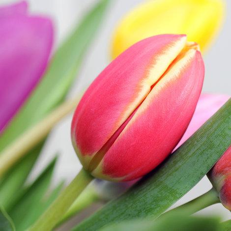 20 bunte tulpen mit fuchsiafarbener vase. Black Bedroom Furniture Sets. Home Design Ideas