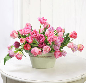40 Stiele rosafarbene gefüllte Tulpen in Rosa