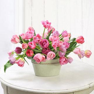Tulpen gefüllt in Rosa 40 Stiele