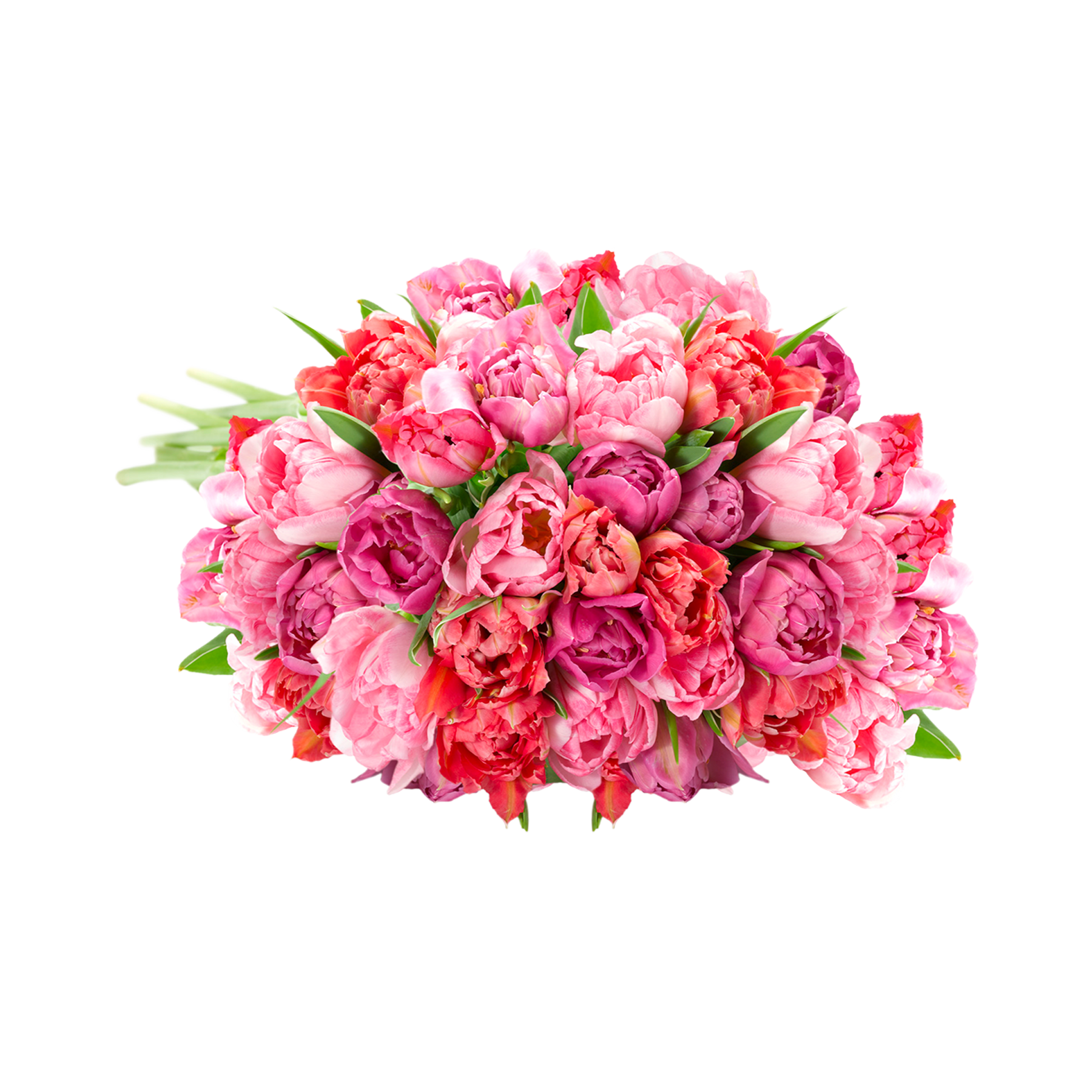 #40 Stiele rosafarbene gefüllte Tulpen#