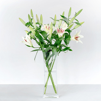 Lilien in Weiß 6 Stiele