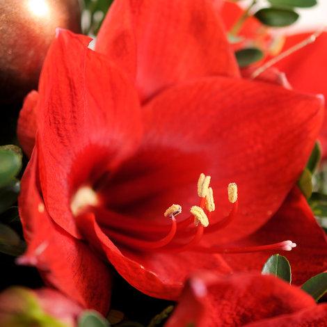 Blumenstrauß  Engelszauber