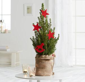 Weihnachtsbaum Roter Weihnachtstraum in Rot, Grün und Braun