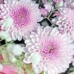 Blumenstrauß  Lust auf Sommer