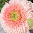 Blumenstrauß  Ostertraum
