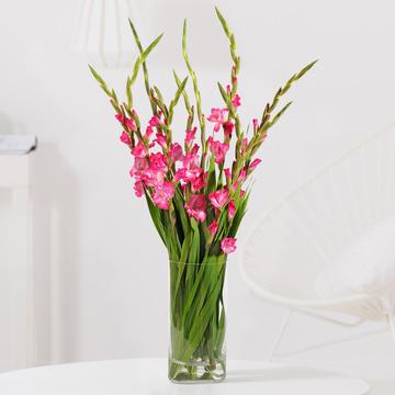 Gladiolen in Pink 10 Stiele