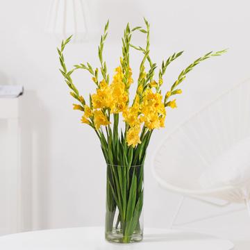 Gladiolen in Gelb 10 Stiele