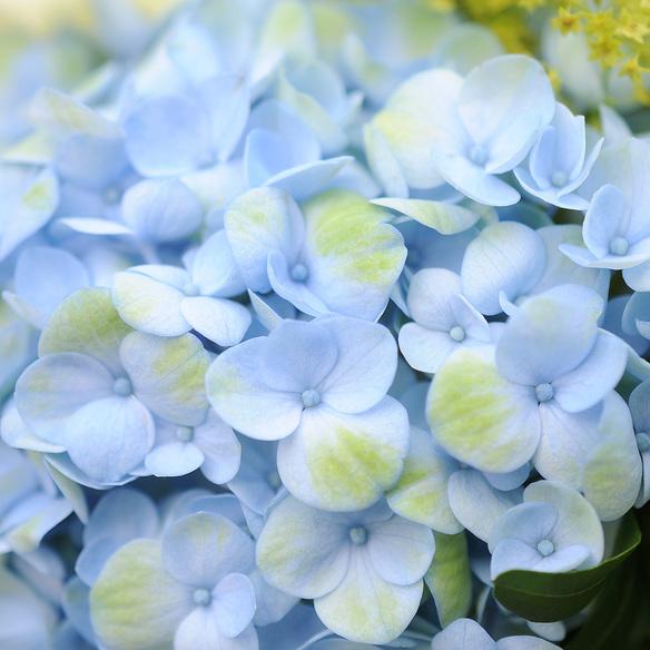 Blumenstrauß  Sommerbrise