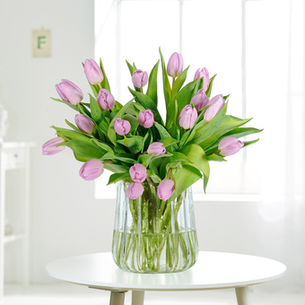 Tulpen in Flieder 20 Stiele
