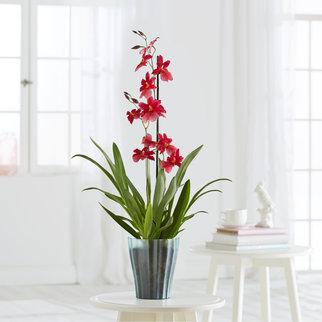 Orchidee Bon Moment