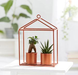 Mini-Sukkulenten Set im Gewächshaus in Kupfer und Grün