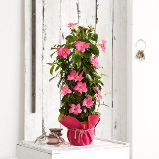 pflanzen f r drinnen und drau en bei. Black Bedroom Furniture Sets. Home Design Ideas