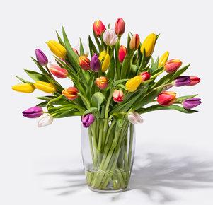 Bunte Tulpen 40 Stiele in Rot, Gelb, Orange, Rosa, Pink und Lila