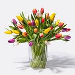 Bunte Tulpen 40 Stiele