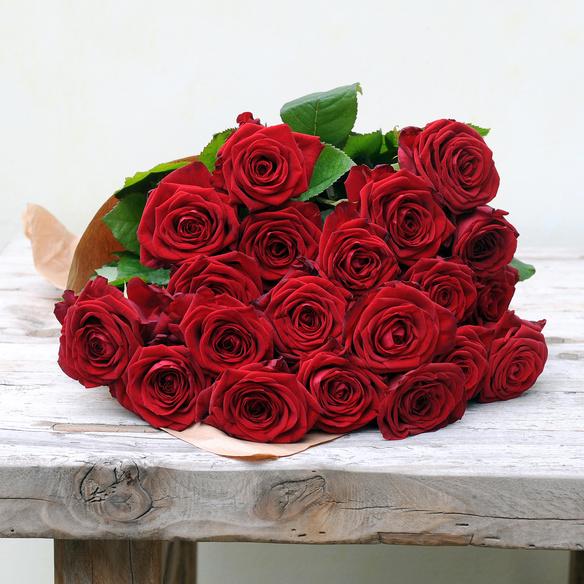 roten rosen