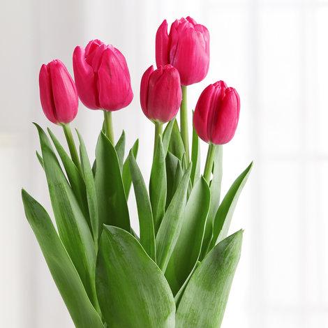 Tulpenzwiebeln Im Topf Pflanzen : tulpenzwiebeln pink im topf ~ Lizthompson.info Haus und Dekorationen