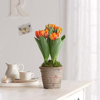 blumen online kaufen und bequem liefern lassen. Black Bedroom Furniture Sets. Home Design Ideas