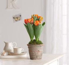 blumen liefern lassen deutschlandweit. Black Bedroom Furniture Sets. Home Design Ideas