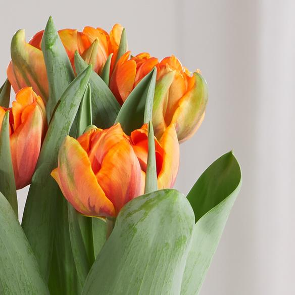 tulpenzwiebeln orange im topf. Black Bedroom Furniture Sets. Home Design Ideas