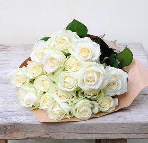 Weiße Rosen in Weiss