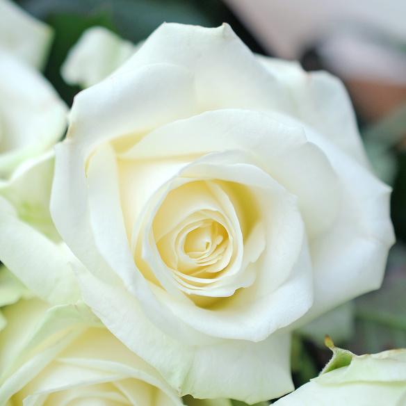 Rosenstrauß  Weiße Rosen