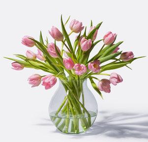 Tulpen in Rosa 20 Stiele in Rosa