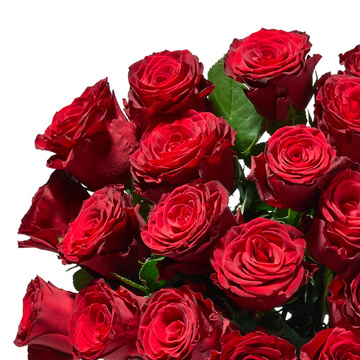 Premium-Rosen in Rot 25 Stiele