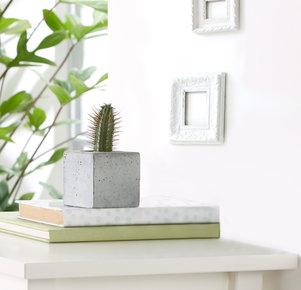 "Kaktus ""Bayo"" im Betonblock"
