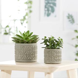 pflanzen online f r drinnen und drau en. Black Bedroom Furniture Sets. Home Design Ideas