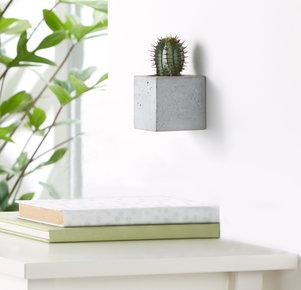 """Kaktus """"Langa"""" im Betonblock"""
