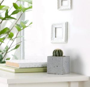 """Kaktus """"Eka"""" im Betonblock"""