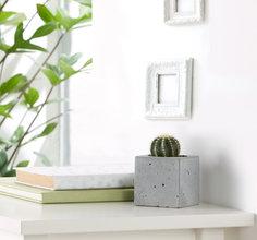 sukkulenten online kaufen versenden. Black Bedroom Furniture Sets. Home Design Ideas