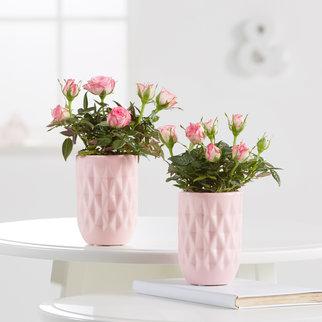 Topfrosen mit 2-farbiger Blüte mit Übertöpfen