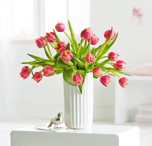 20 gefüllte Tulpen Columbus in Gelb und Pink