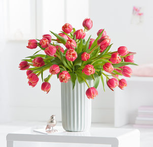 40 gefüllte Tulpen Columbus in Gelb und Pink