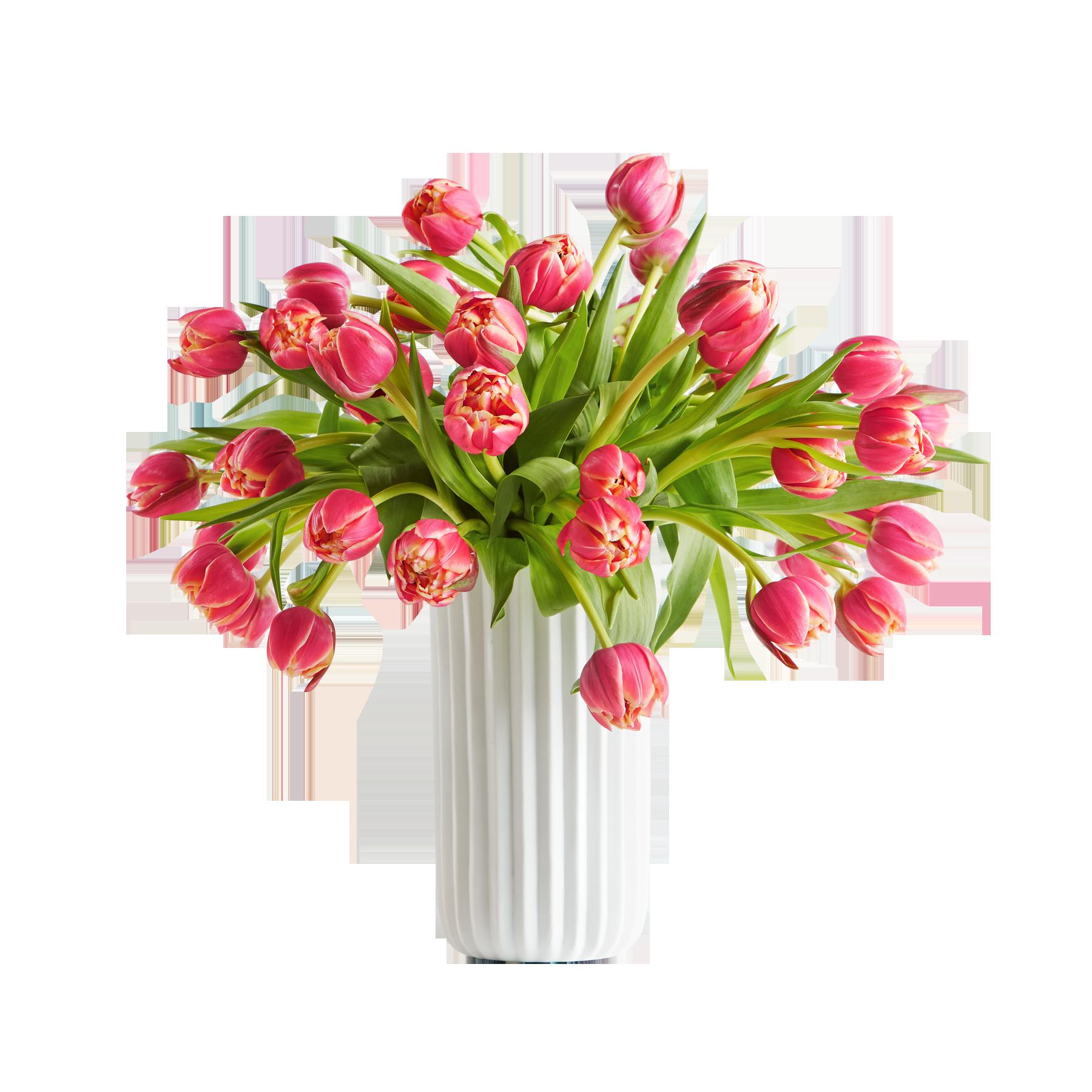 #40 gefüllte Tulpen Columbus#