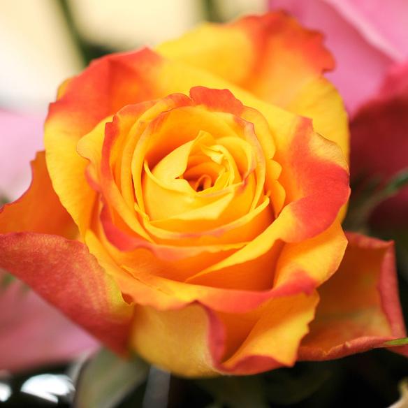 Rosenstrauß  Bunte Rosen 40 Stiele