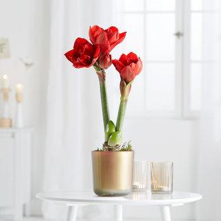 weihnachtsblumen online bestellen versenden. Black Bedroom Furniture Sets. Home Design Ideas