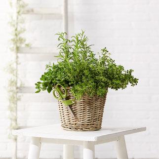 Garten-Kräuter mit Schere im Korb