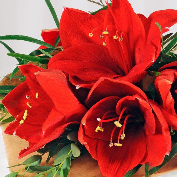 Rote Amaryllis 1 Stiel